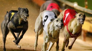 Four Corners Greyhound Racing